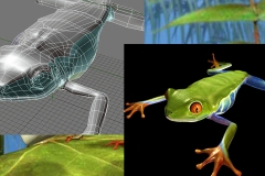 DCDC_Gallery_DcFrog2_modeluvtext