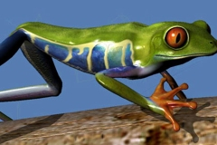 DCDC_Gallery_DcFrog2_onbranch2