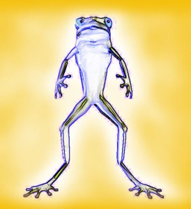 frog2_anifrognetview