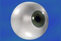 DCDC_Gallery_MelodyAlconDuotrav_eyeball