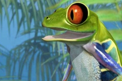DCDC_Gallery_DcFrog2_happy